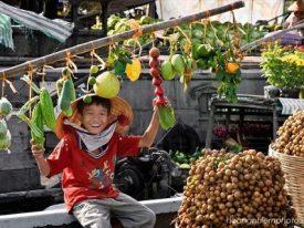 Mekong Delta fireflies day trip