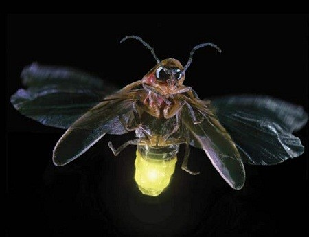 mekong-firefliestour-6