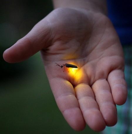 mekong-firefliestour-7