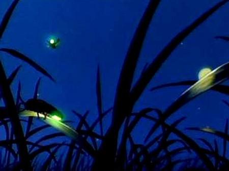 mekong-firefliestour-8