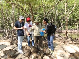 Can Gio mangrove forest 1 days daily departures tour